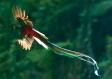 Ave Nacional El Quetzal